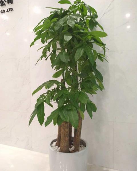 南京讯易商贸有限公司与南京泰笛建立绿植租赁合作