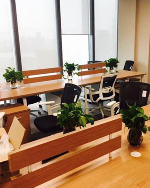 碧桂园地产鄂北分公司与武汉泰笛建立绿植租赁合作