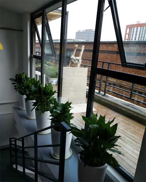 来广营国创产业园与北京泰笛建立绿植租赁合作