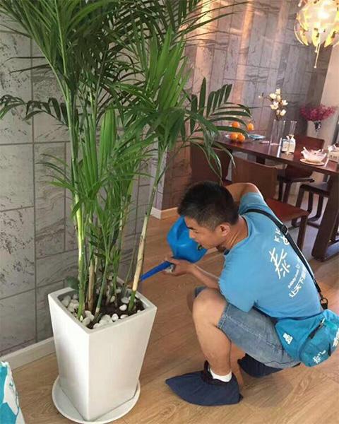 武汉纬特施企业管理办公室与武汉泰笛建立绿植租赁合作