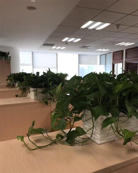 广州市倍儿行科技有限公司与广州泰笛建立绿植租赁合作