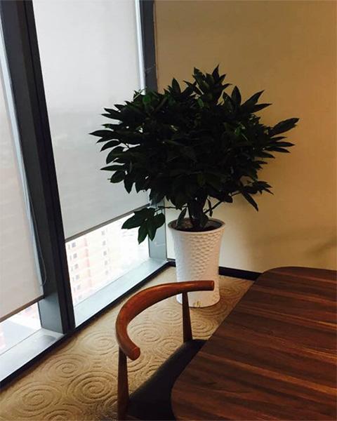 武汉金拓维软件与武汉泰笛建立绿植租赁合作
