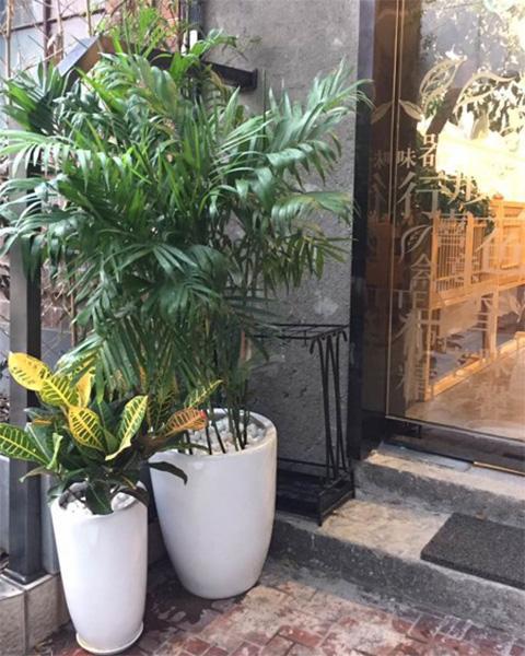 上海茶叙文化传播有限公司与上海泰笛建立绿植租赁合作