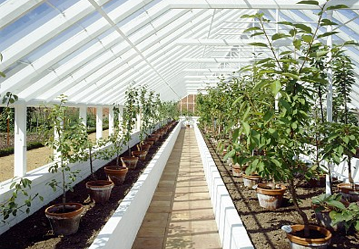 保障绿植的新鲜度