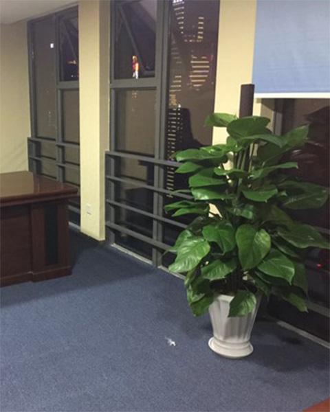 成都世鳌商务服务有限公司第一分公司与成都泰笛建立绿植租赁合作