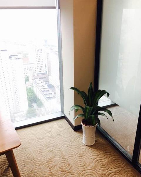 南京瀚鑫电子商务有限公司与南京泰笛建立绿植租赁合作