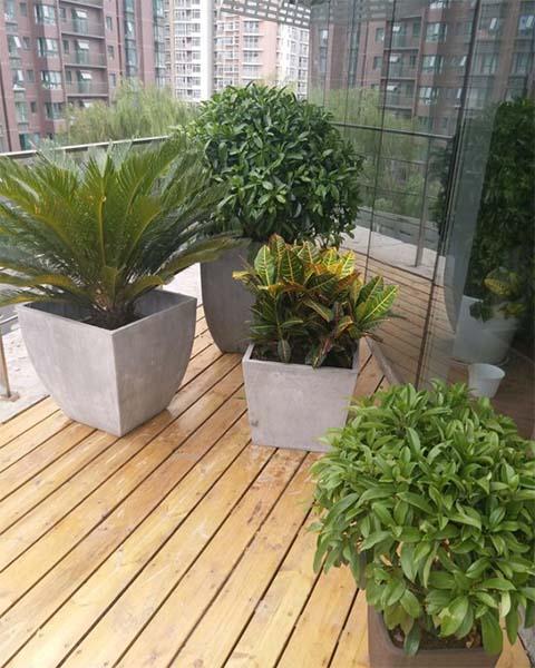 广州美维口腔门诊部有限公司与广州泰笛建立绿植租赁合作
