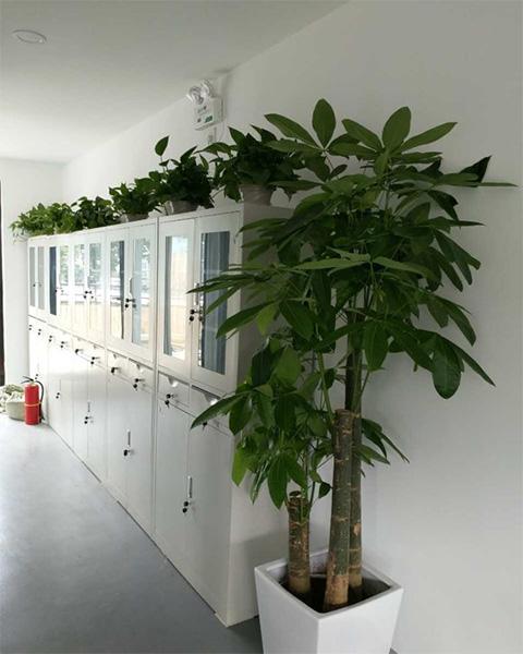 苏州汇德融房地产开发有限公司与南京泰笛建立绿植租赁合作